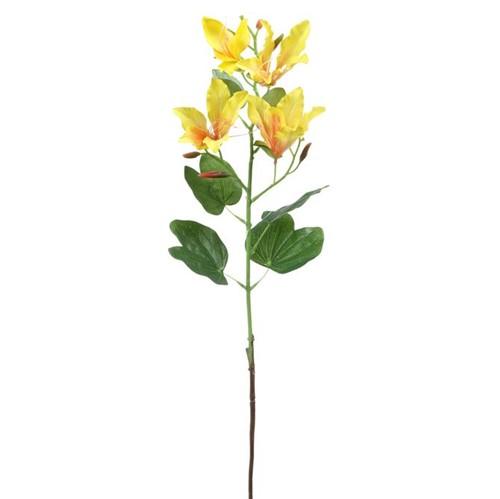 Ammi Flor Bauhinia Amarelo/verde