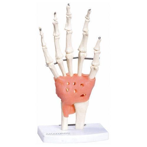Articulação da Mão Anatomic - Tgd-0162-c