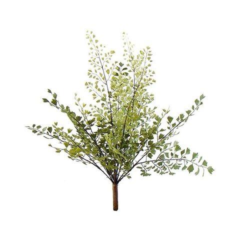Bouquet Avenca 35cm