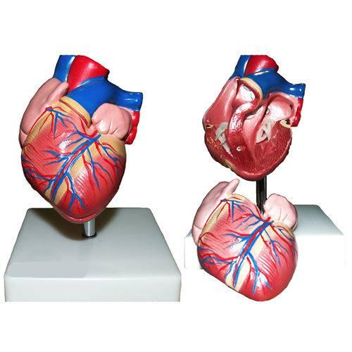 Coração Tamanho Natural com 2 Partes Anatomic - Código: Tgd-0322