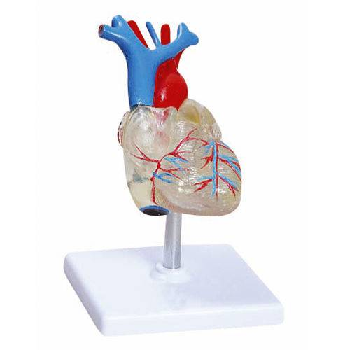 Coração Transparente com 2 Partes Anatomic - Tgd-0322-t