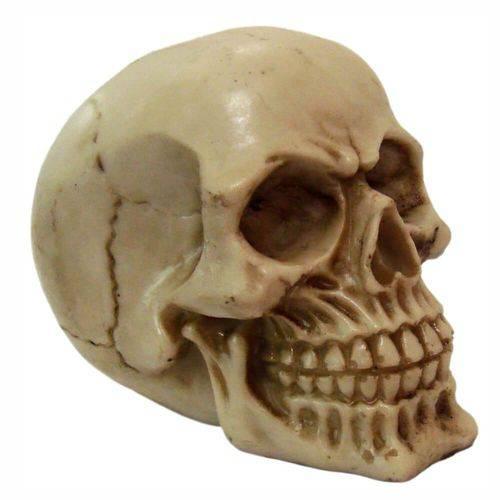 Crânio Caveira Pequeno Decoração.