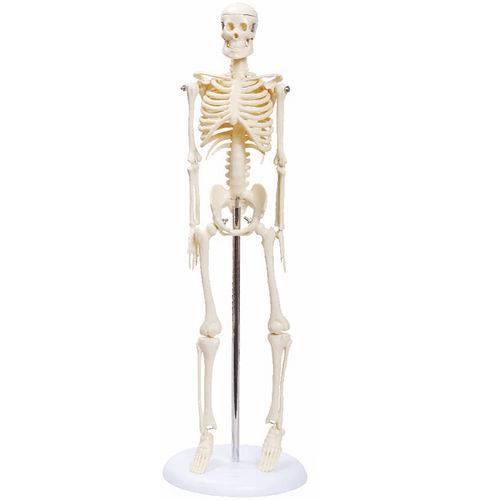 Esqueleto de 45 Cm - Anatomic - Cód: Tgd-0121