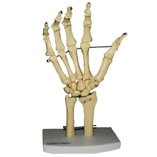 Esqueleto de Mão com Ossos do Punho Anatomic - Tgd-0157-b
