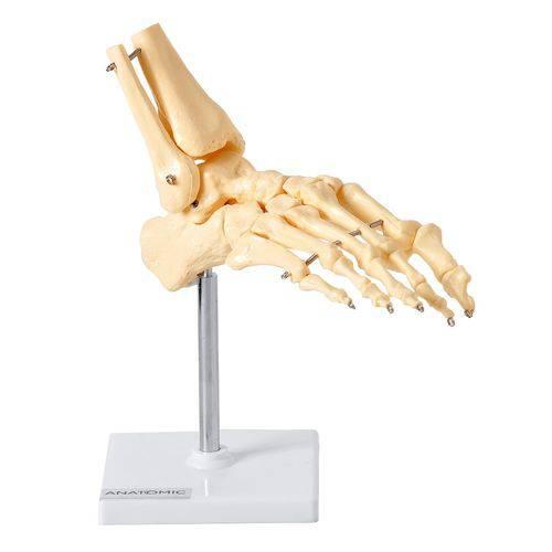 Esqueleto de Pé C/ Ossos Tornozelo COSIMMED.