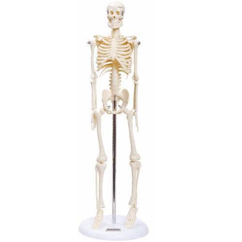 Esqueleto Humano 45 Cm Articulado com Suporte