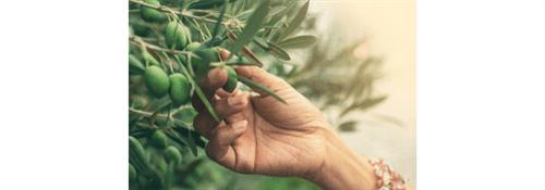 Gestão de Agronegócios | UNIC | PRESENCIAL Inscrição