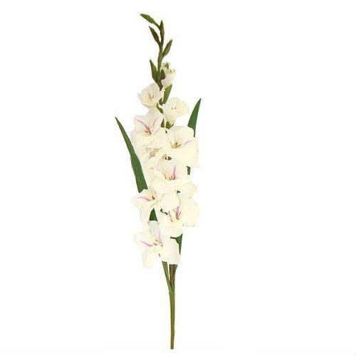 Gladiolo Galho Branco 1mt