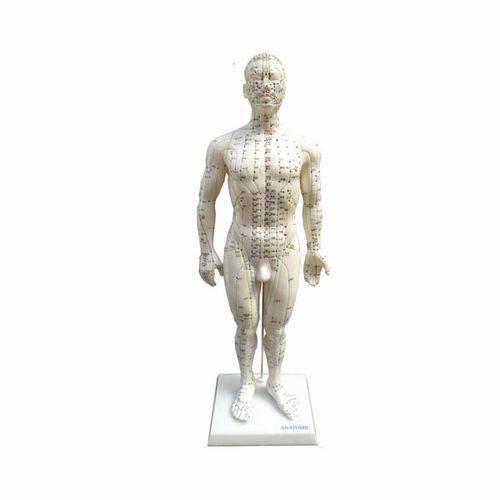 Modelo Masculino de 50 Cm para Acupuntura Anatomic - Código: Tgd-0404