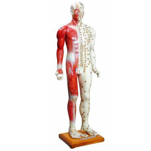 Modelo Masculino de 85 Cm para Acupuntura Anatomic - Código: Tgd-0401-b