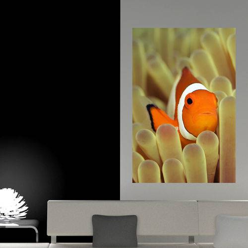 Painel Adesivo de Parede - Peixe Palhaço - N3148