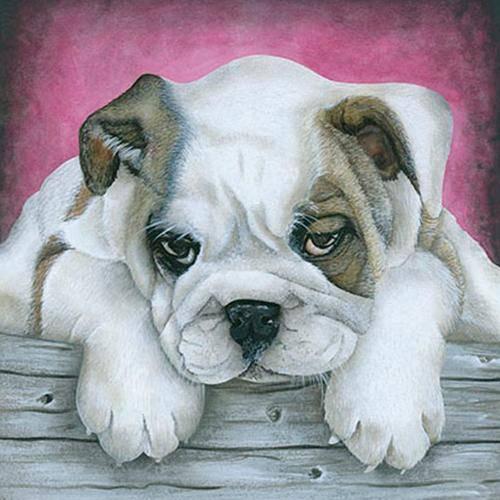 Papel Transfer 30x30 Cachorro Bulldog Pt30-023 - Litoarte