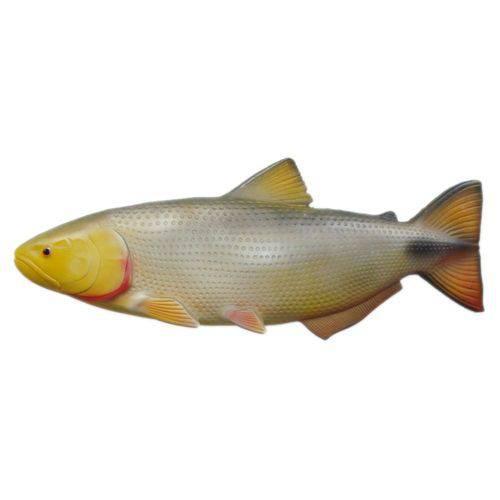 Peixe Dourado de Parede em Alto Relevo para Decoração.
