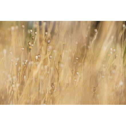 Plantas Secas - 45 X 30 Cm - Papel Fotográfico Fosco