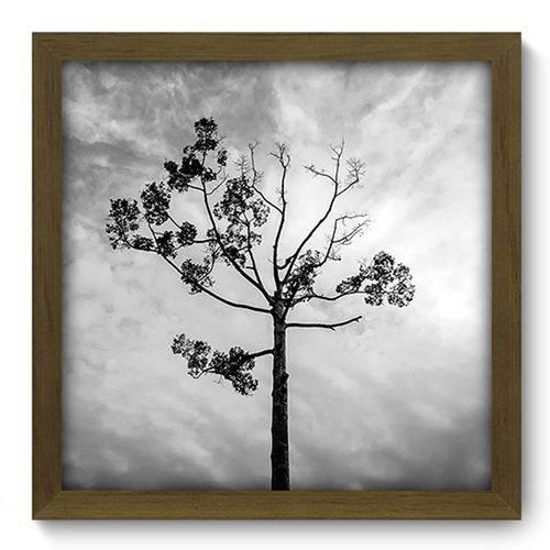 Quadro com Moldura - 33x33 - Árvore - N2276