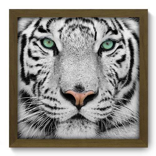 Quadro com Moldura - 33x33 - Tigre Branco - N2017