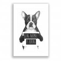 Quadro Decorativo Cachorro Ps233