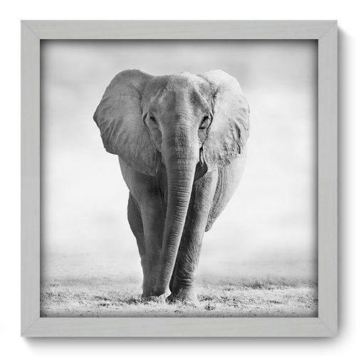 Quadro Decorativo - Elefante - 33cm X 33cm - 002qnsbb