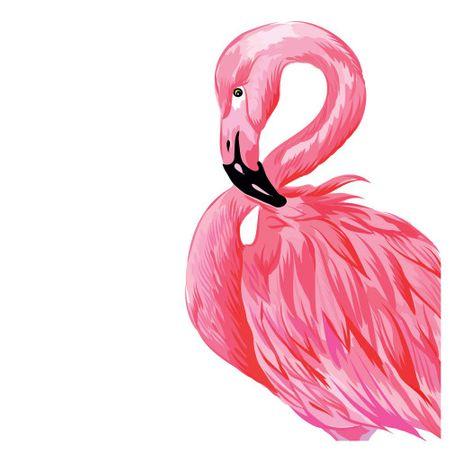 Tecido Quadrado Digital 49 X 49cm - Flamingo - 8126