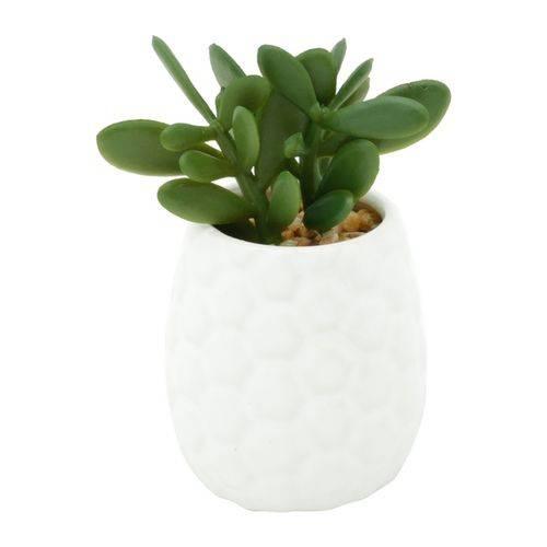 Vaso de Porcelana Branco com Planta Jade Sucullent Urban