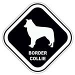Adesivo Border Collie