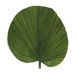 Aplique Decoupage Litoarte APM8-1172 em Papel e MDF 8cm Folha Palmeira Leque