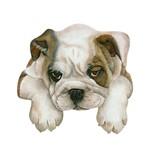 Aplique Decoupage Litoarte APM8-656 em Papel e MDF 8cm Cachorro Bull Dog Inglês