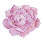 Aplique Decoupage Litoarte APM8-834 em Papel e MDF 8cm Suculenta Rosa
