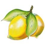 Aplique Decoupage Litoarte APM81-004 em Papel e MDF 8cm Lima Limão