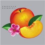 CD - Phoenix - Bankrupt!