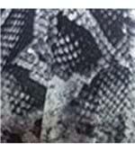 Conjunto de Calcinha e Sutiã Estampado Plus Size Fio Dental - 259 Cobra Preto e Branco/48