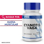Cyanotis Vaga 200mg 60 Cáps