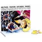Diorama Neurônio Motor (com Prancha Explicativa) - Anatomic - Código: Tgd-0008