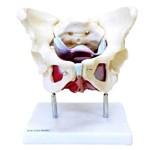 Esqueleto Pélvico com Útero Anatomic - Tgd-0351