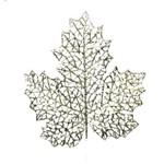 Folha para Árvore Natal Decoração Natal 32cm Nude