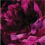 Folha Scrapbook Dupla Face Hawthorne Flores Ref.21134-WER151/314102 American Crafts