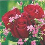 Guardanapos Trio de Rosas com 2 Unidades Ref.21002-GUA21738 Toke e Crie