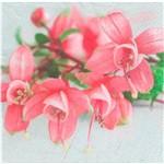 Guardanapo Decoração Flores e Pistilo Gua200533 - Toke e Crie