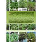Livro - Plantas Medicinais - do Plantio à Colheita