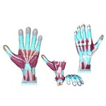 Mão Muscular Ampliada em 3 Partes Anatomic - Tgd-0330-m