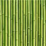 Papel de Parede Adesivo Bambu BB19019