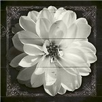 Papel Decoupage Adesiva Litoarte DAX-129 10x10cm Flor Branca