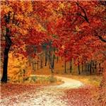 Pôster Outono
