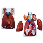 Pulmão Luxo em Prancha Anatomic - Código: Tzj-0318-a