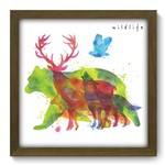 Quadro com Moldura - 33x33 - Wildlife - N2095