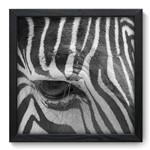 Quadro com Moldura - 33x33 - Zebra - N3181