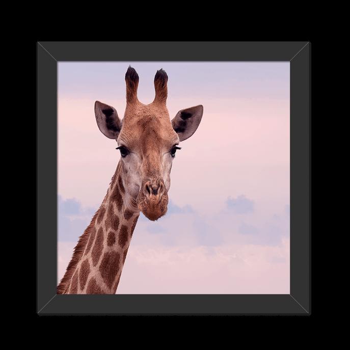 Quadro Girafa Foto Moldura Preta Lisa - 20X20cm-sv