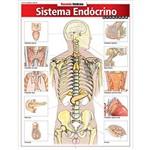Sistema Endócrino. Avançado