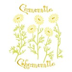 Stencil Litoarte 21,1x17,2 STM-421 Camomila