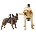Suporte Canino - Lombar e Peito